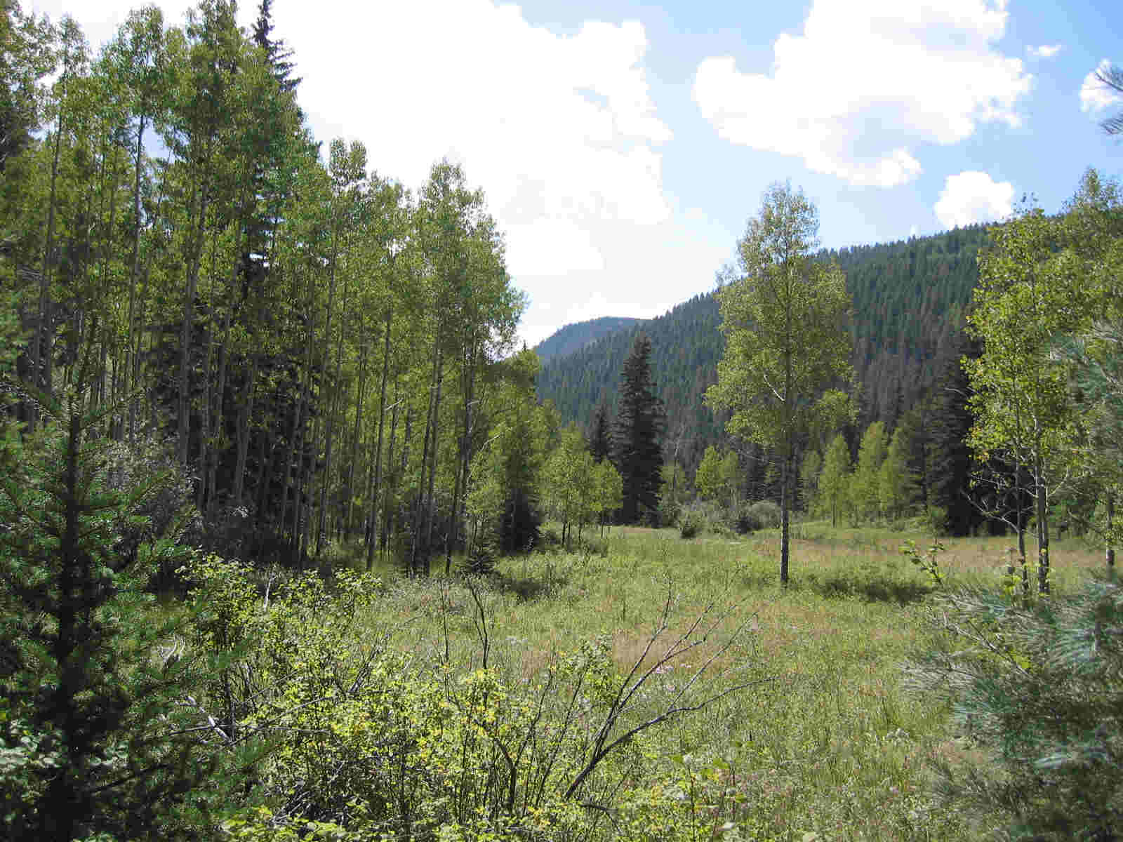 Holy Ghost Trail In Pecos Wilderness